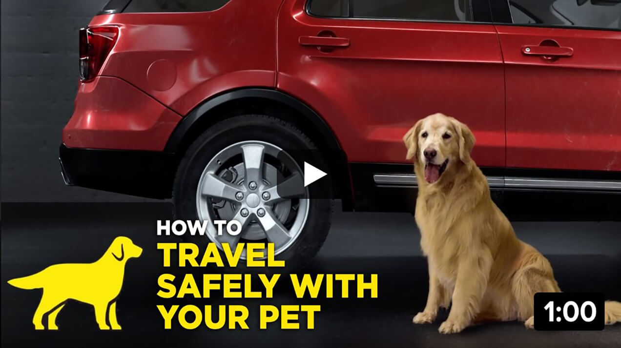How To Travel Safely with Your Pet 1:00